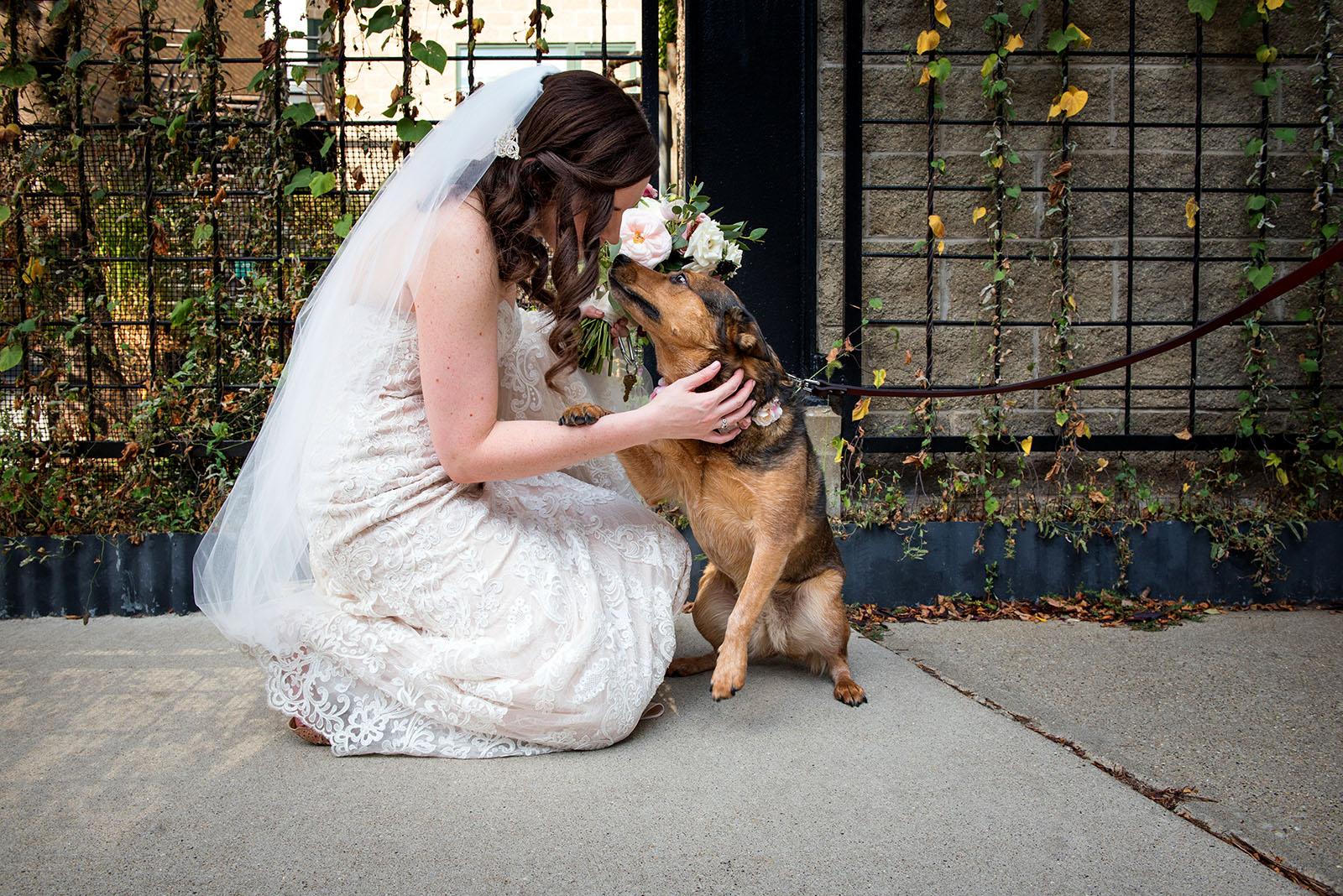Bride Dog Pihoto