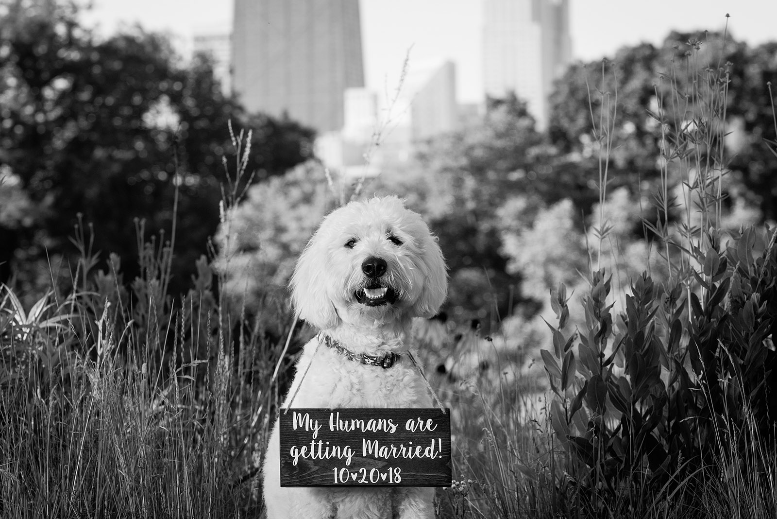 My Humans are getting married dog Engagement Pictures Inspiration
