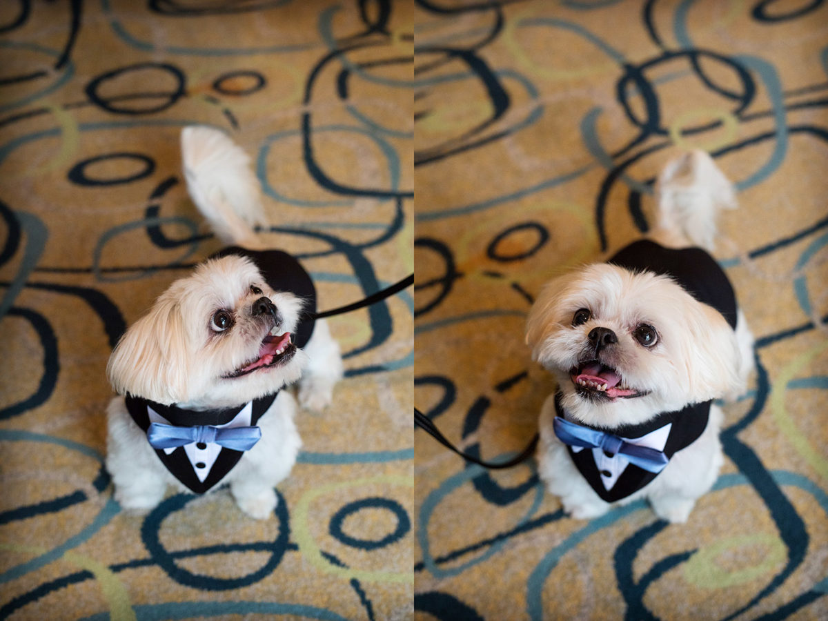 Wedding Suit Dog