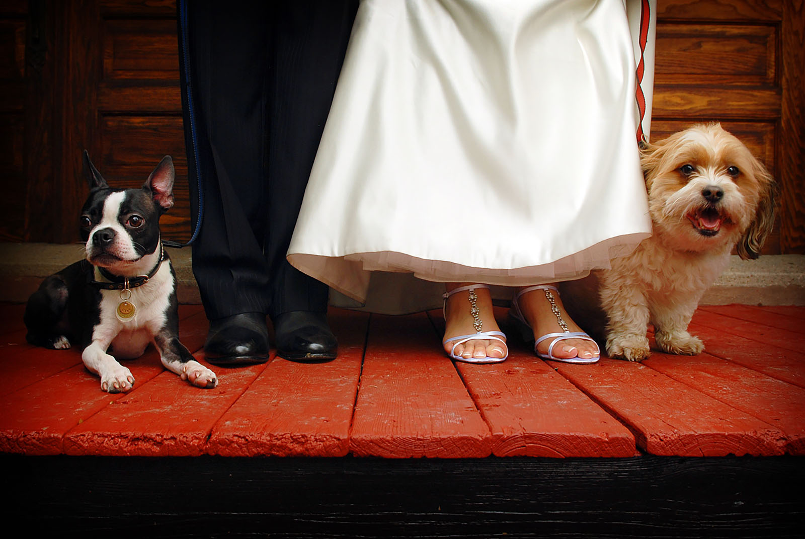 wedding dogs on leashes